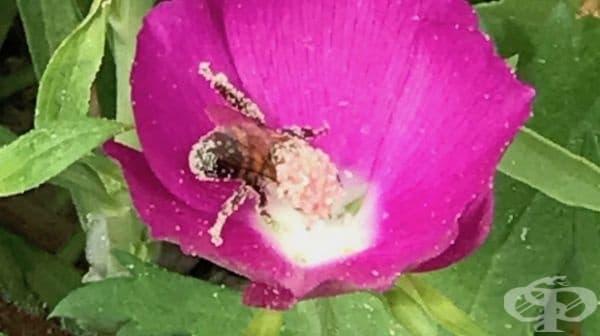Пчелите, погледнати от друг ъгъл