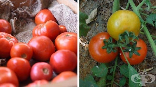 Доматите също са плодове. Всичко, което има семена вътре, е научно класифицирано като плод.