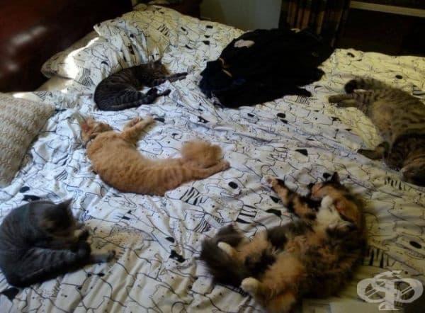 А тук котетата са заели цялото легло.