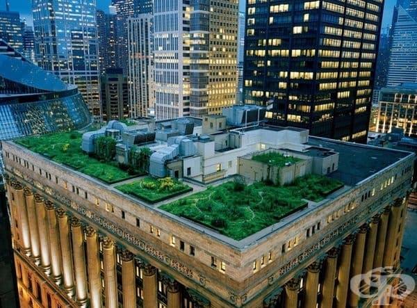 Градина на покрива на мегаполис, Чикаго.