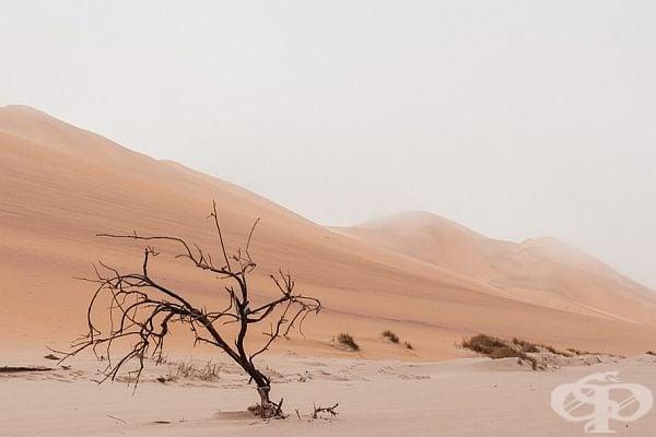 Пустинята и нейната сила.