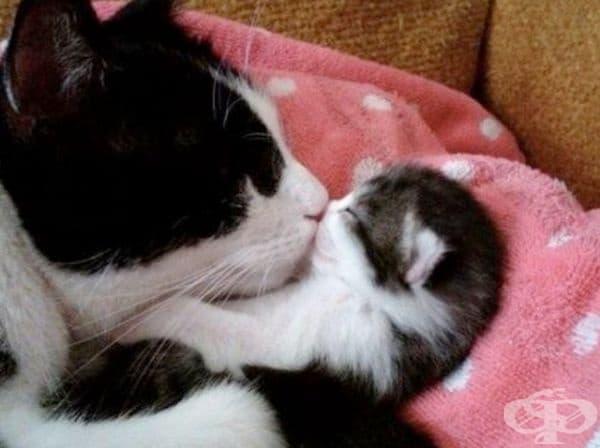 Мила целувка.