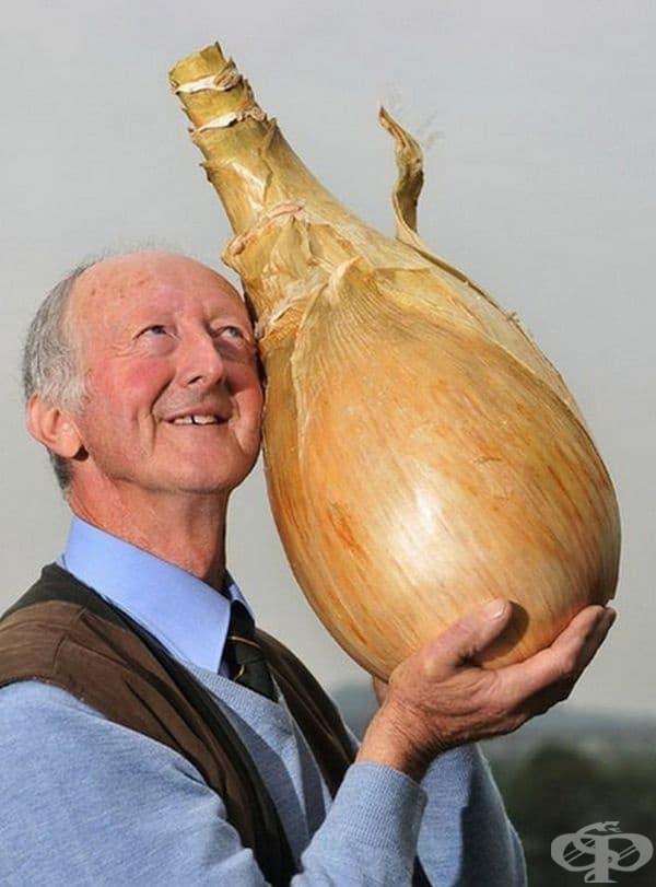 Зеленчуковият производител Питър Глейзброук държи лук, чието тегло достига 8 кг. Той също е участвал на панаира в Йоркшър през 2011 година.
