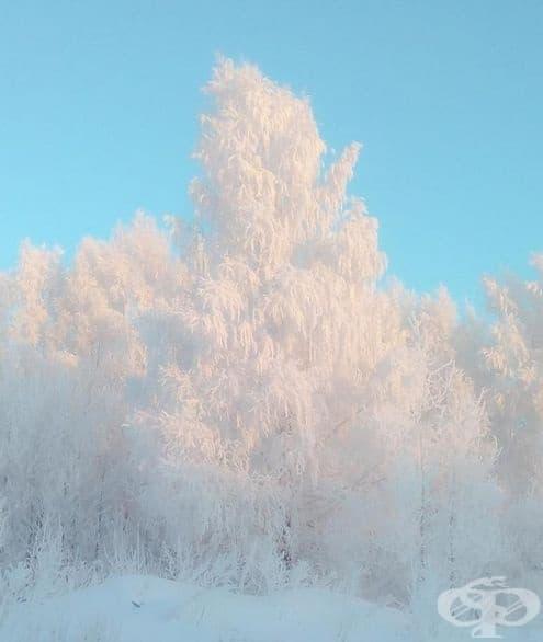 Бяла красота върху син фон.