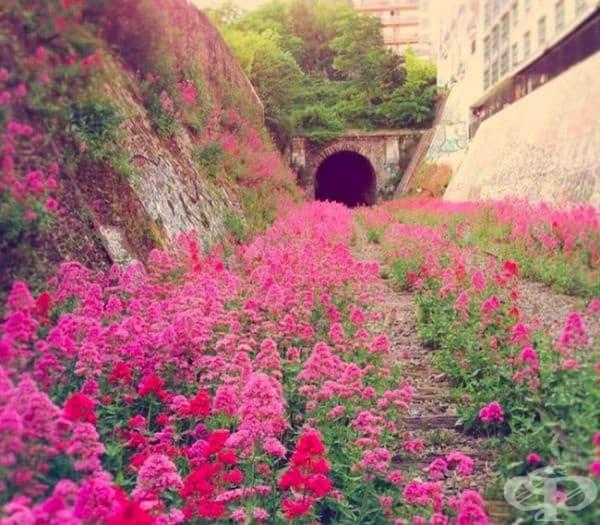 Париж, оцветен в розово.