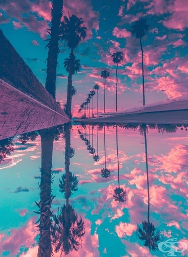 Красиви палми.