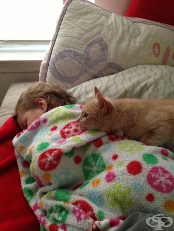 Някои казват, че котките могат да лекуват болести.