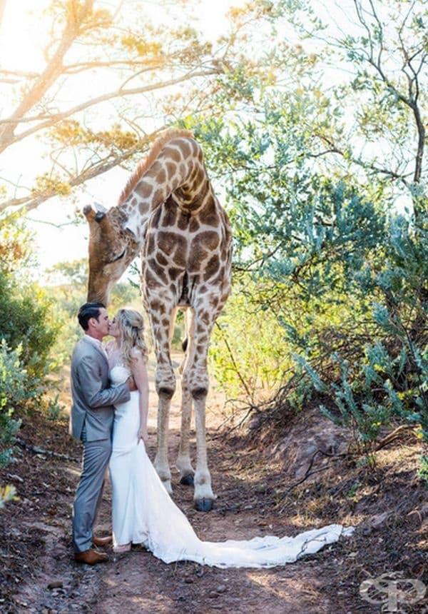 В началото повечето гости са се уплашили. Единствено младоженците са останали спокойни.