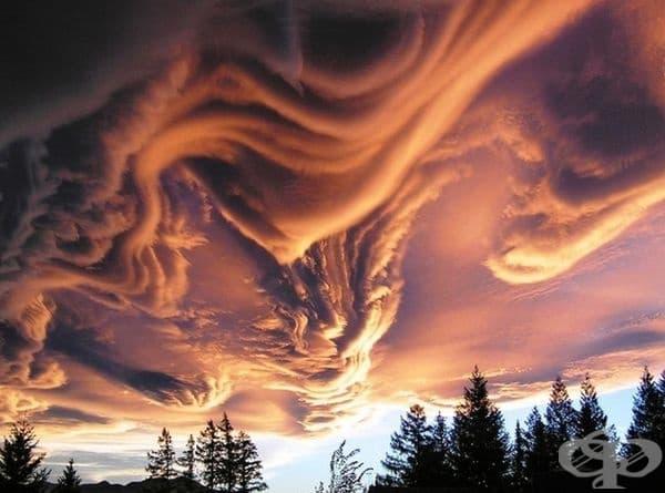 Да, природата е велик художник.