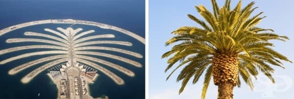 Палмовите острови в Дубай
