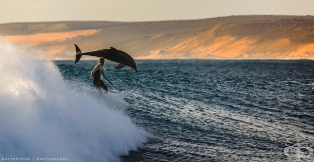 Сърфист и делфин на метри един от друг