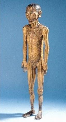 Модел, датиращ от династия Мин. Той показва подходящите за кръвопускане зони.