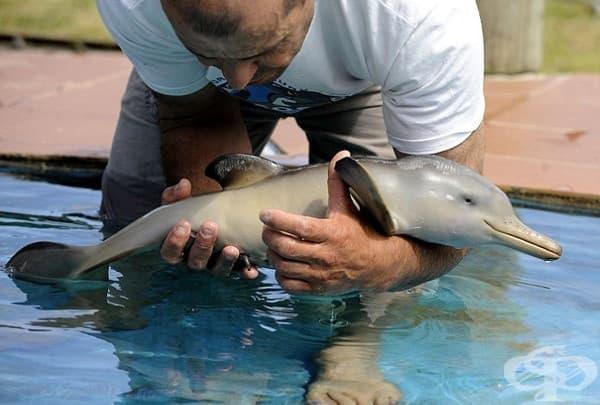 Делфинче