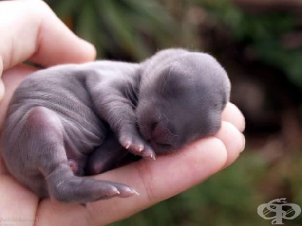 Бебе зайче