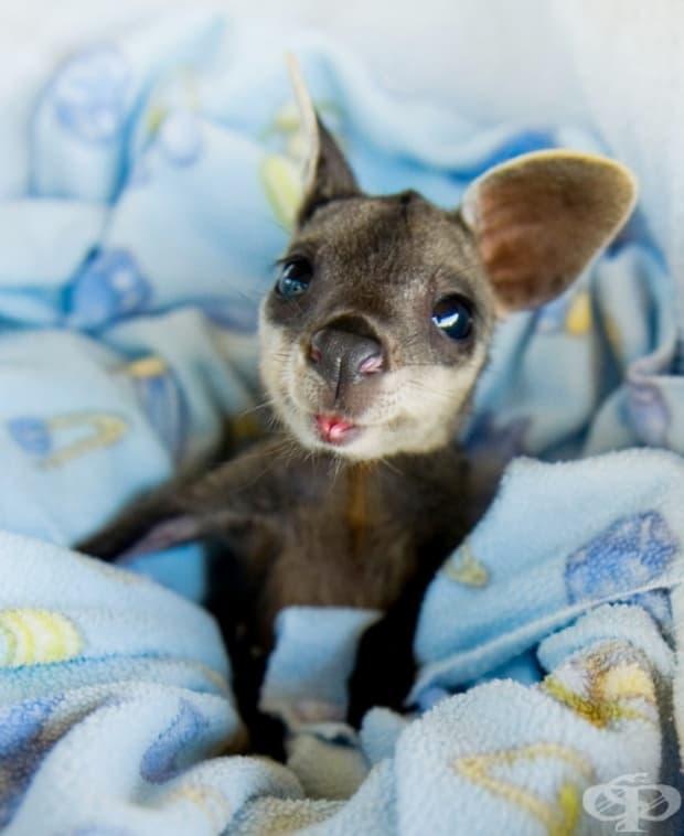 Бебе кенгурy