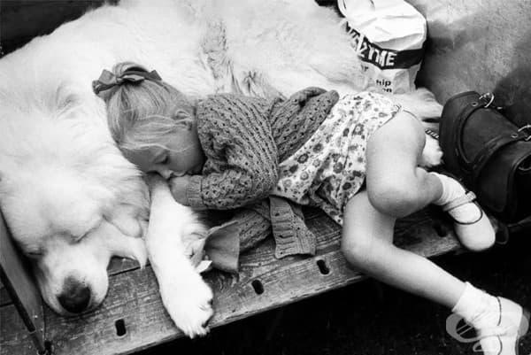 10 снимки, които доказват, че кучетата са по-удобни от възглавница