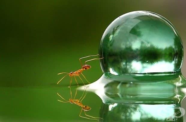 Мравка и капка вода