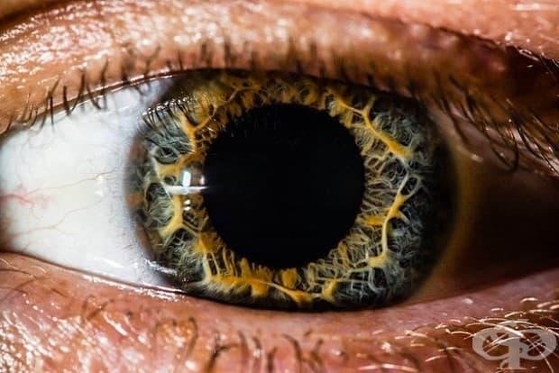 Човешкото око