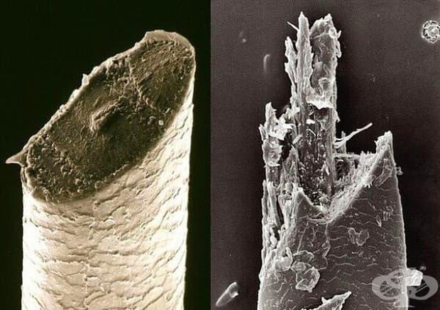 Косъм от брада .. Левият е  прерязан с бръснач, а десният с електрическа самобръсначка