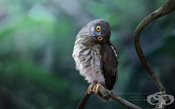 Невероятни снимки на нощни грабливи птици