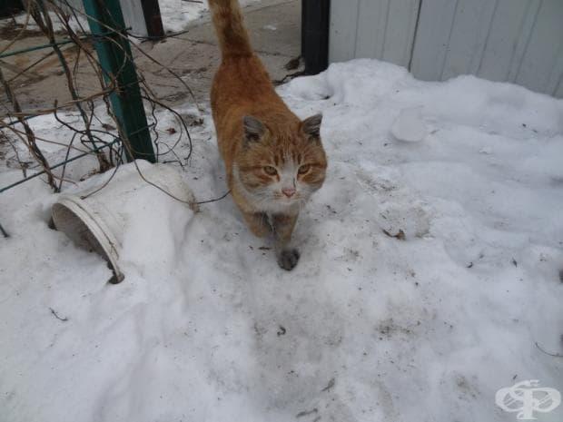 Нашата котка Вася.