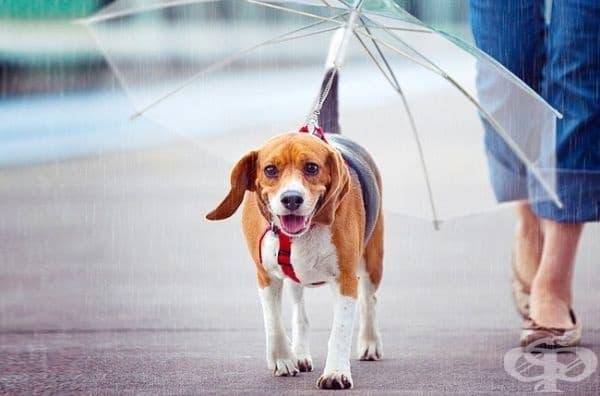 Чадър за кучета.