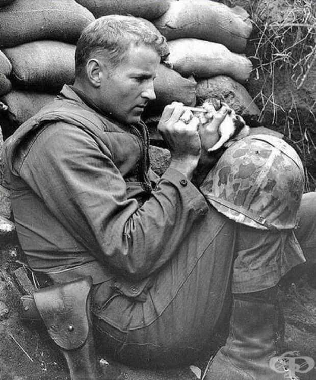 Войник храни двуседмично котенце по време на Корейската война.