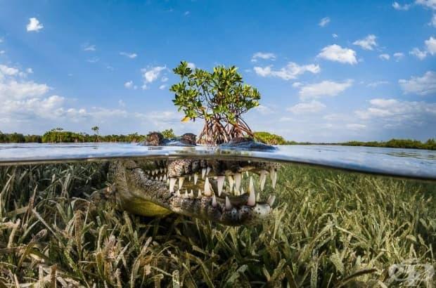 Мангрув, Куба (почетно отличие в категория: природа)