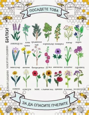 Посадете тези растения в градината си - помогнете на пчелите да живеят!