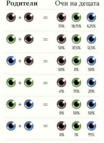Вероятност в % за цвят на очите на децата, в зависимост от цвета на очите на техните родители