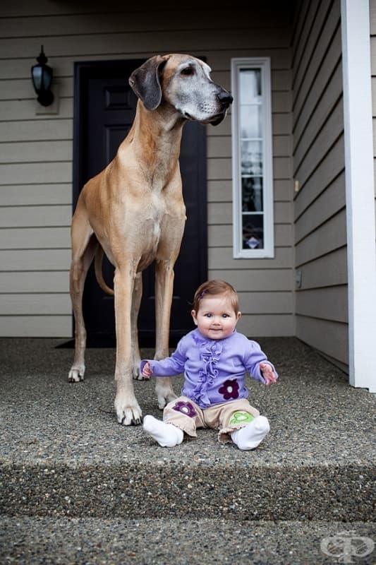 27 снимки, които доказват, че децата се нуждаят от животинче и обратното