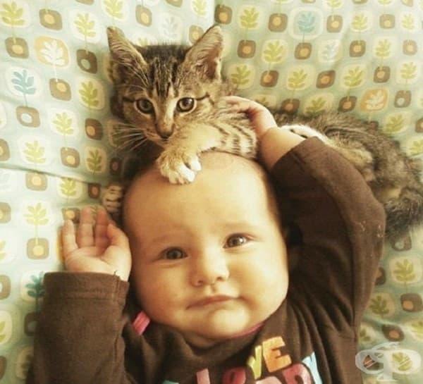 Деца и котки – най-сладкото приятелство – II част