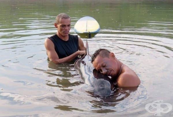 Сърфисти помагат на бебе делфин, което се е изгубило.