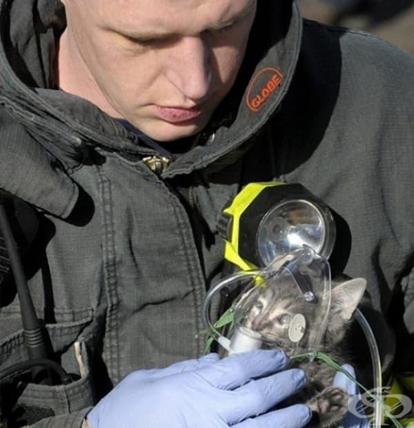 Пожарникар слага кислородна маска на коте, което е спасил от горяща сграда.