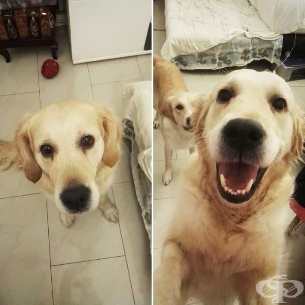 """Животни преди и след като им кажат """"добро момче"""""""