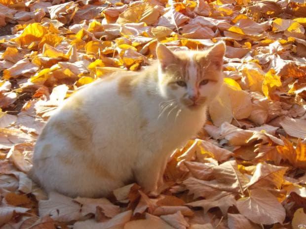 Красива снимка на котка насред есенни листа