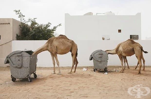 """21 абсурдни снимки от един """"нормален"""" ден в Дубай!"""