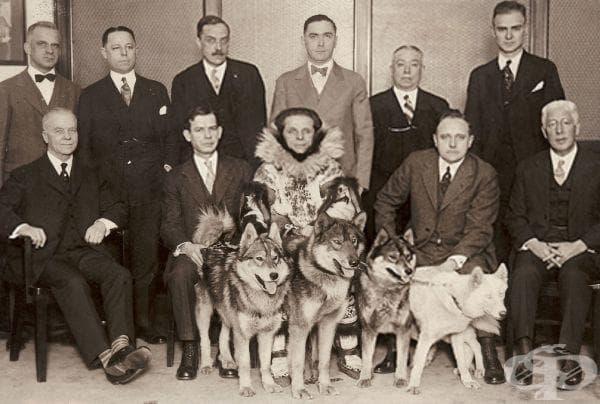Балто: кучето, спасило деца, болни от дифтерия