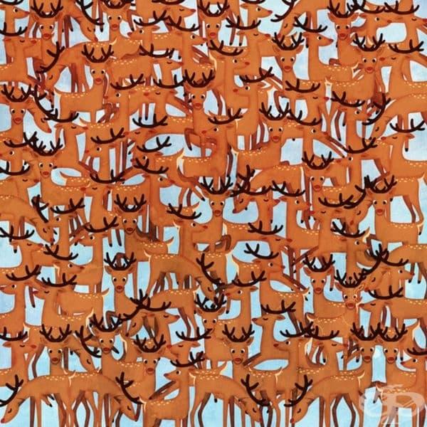 Можете ли да откриете елена, който се отличава от всички останали?