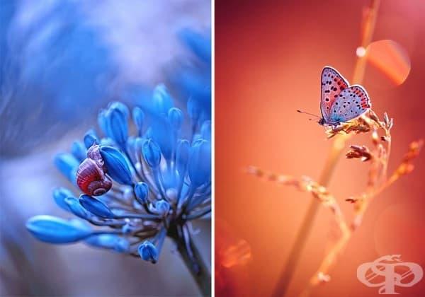 Приказните произведения на полската фотографка Магда Васичек
