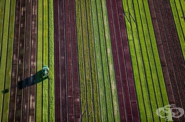 Земеделието в Аризона