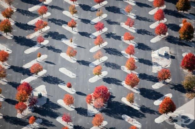 Дървета, засадени на паркинг