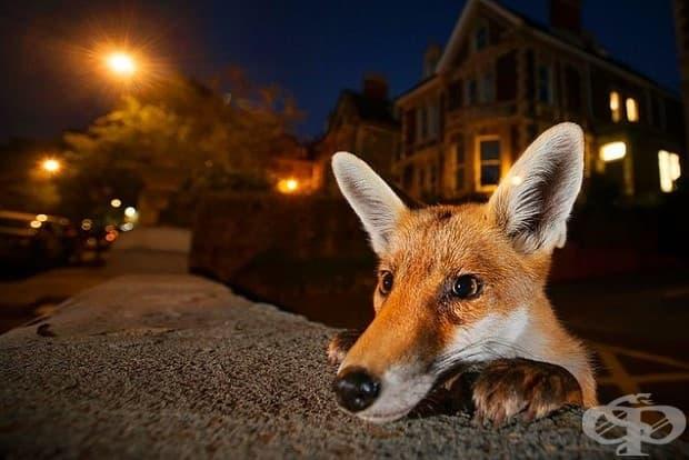 3. Шумният съсед от Сам Хобсън, Великобритания