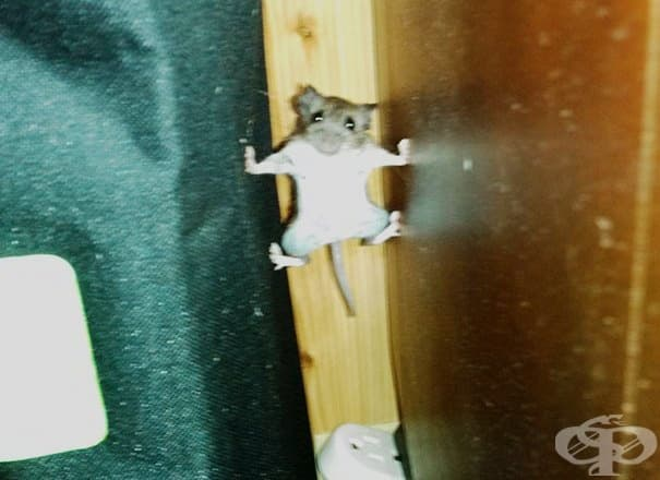 """Мишка, която си мисли, че участва в """"Мисията невъзможна"""""""