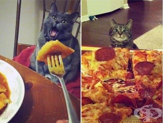 Котки, които ще ви изядат вечерята изпод носа