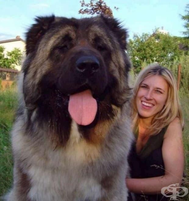 Как да свалите бързо грима си: вземете си това куче, което да ви оближе два пъти лицето!