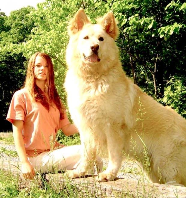 Златното правило за направата на добра снимка е да си избереш правилното куче, което да застане до теб.