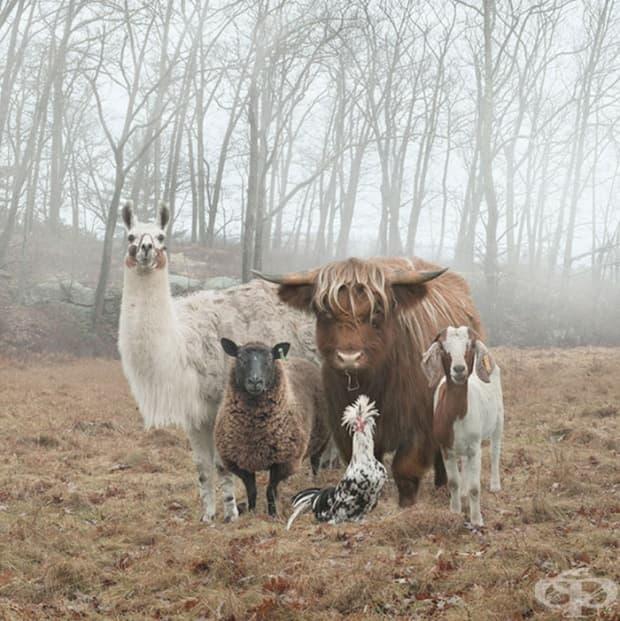 20 животни, които са прекалено готини за тази галерия!