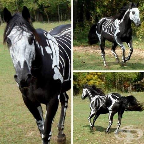 Ужасяващо сладки хелоуински костюми за домашни любимци