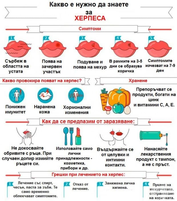 Какво трябва да знаем за херпеса (инфографика)